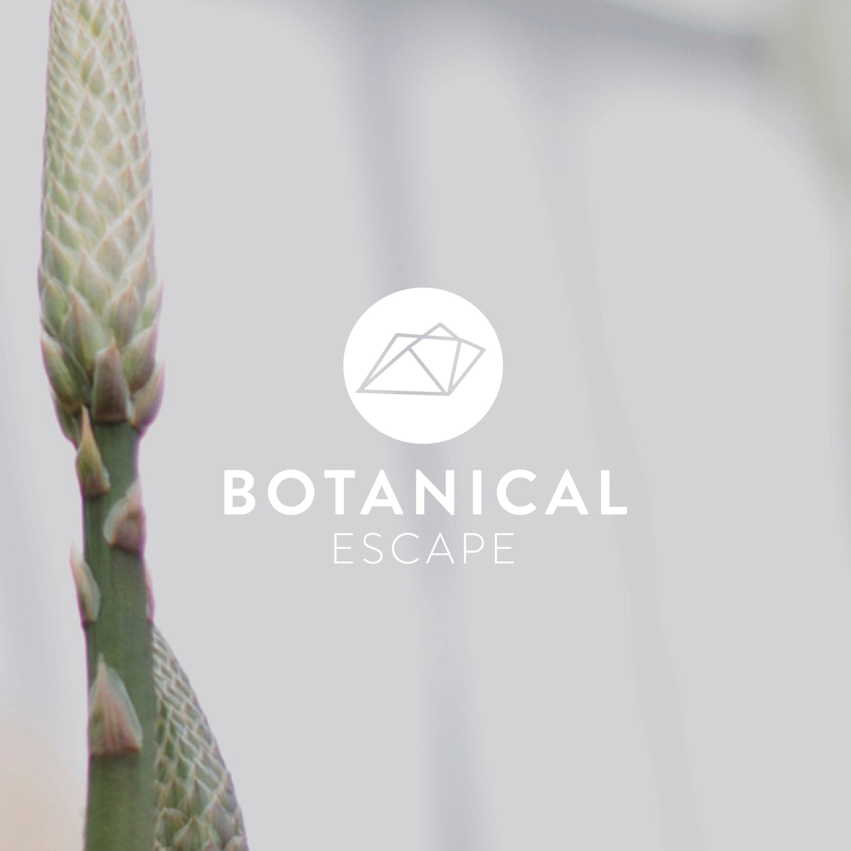 A Botanical Escape​
